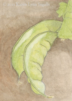 still life acrylic painting, pea pods, acrylics like watercolor, Karen Lynn Ingalls art